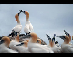 The Circle. (Confused-Hair) Tags: islands lovers gannets saltee thecircle aplusphoto confusedhair needsleepitslatenightnight
