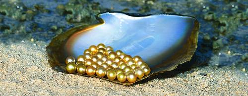 f72fb28e3 Golden Palawan South Sea pearls on MOP shell