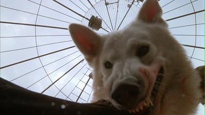 white dog criterion essay