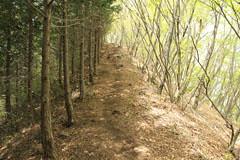 稜線の上の道