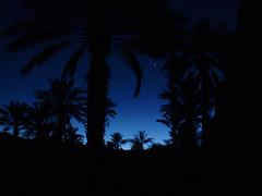 LE SOIR DANS L'OASIS DE TAZZARINE (nouredine) Tags: oasis maroc soir marokko tazzarine moocco nouredine tentenomade