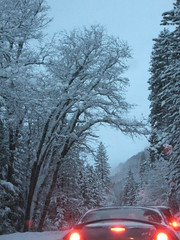 Trees and brake lights (c-nugget) Tags: eric tahoe 2009 winterstorm