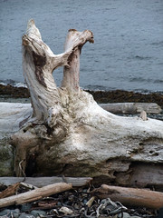 Driftwood Sooke Harbour (lalique7) Tags: texture nature abstraction drftwood haphazartblue