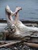 Driftwood Sooke Harbour (lalique7) Tags: texture nature abstraction drftwood haphazartblue