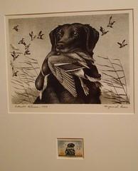 Maynard Reece duck stamp