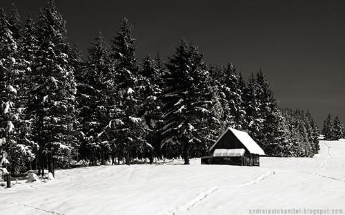 despre alb ca zapada (X)