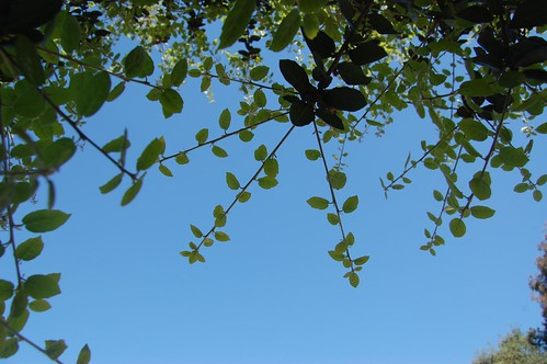 Front Yard - Leaves and Blue Sky
