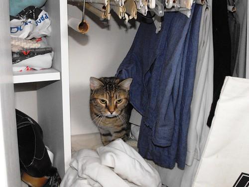 Closet Explorer #1