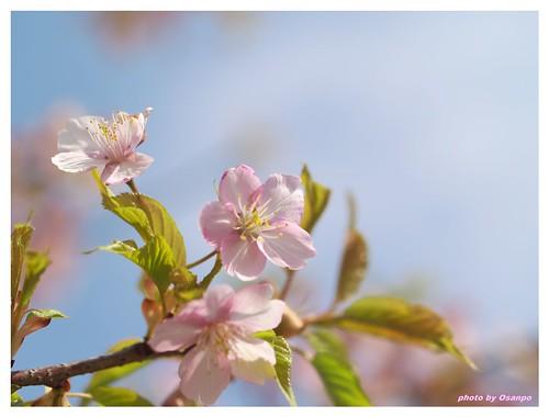 Spring days 090320 #01