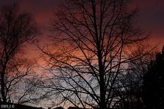 Drama in the sky (Cobra_11) Tags: pink blue trees red sky orange cloud black tree nature silhouette clouds canon sonnenuntergang natur himmel wolken colourful canoneos siluet bulutlar baum ef50mmf18ii bulut gkyz gnbatm aa suinset doa ef50mm118ii canoneos450d digitalrebelxsi