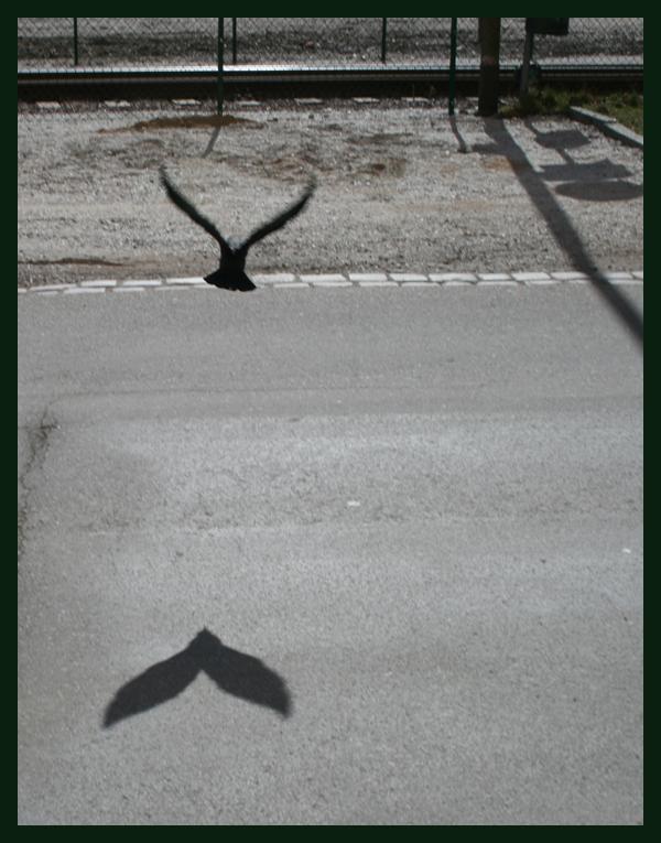 två-fåglar