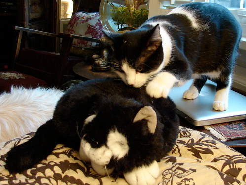 black & white kitten with toy cat