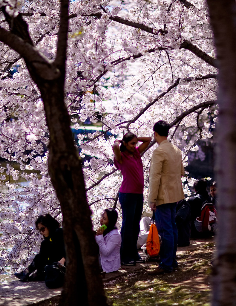 Washington D.C. Cherry Blossoms (2 of 7)
