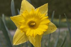 Allerton_Park-36 (chaunceydavis818) Tags: canon eos spring ben il universityofillinois shad uofi allertonpark centralillinois 40d sundayshoot