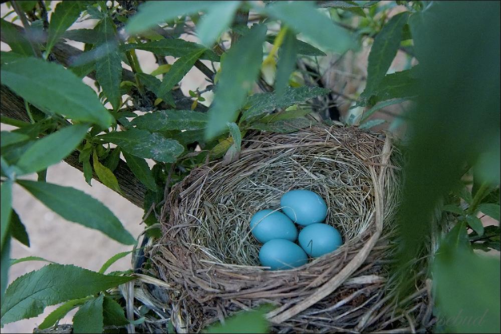 nest ©2009 RosebudPenfold