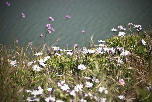 flowers 4