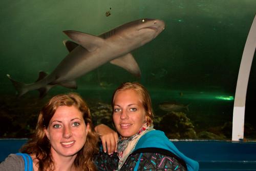Sydney Aquarium-054