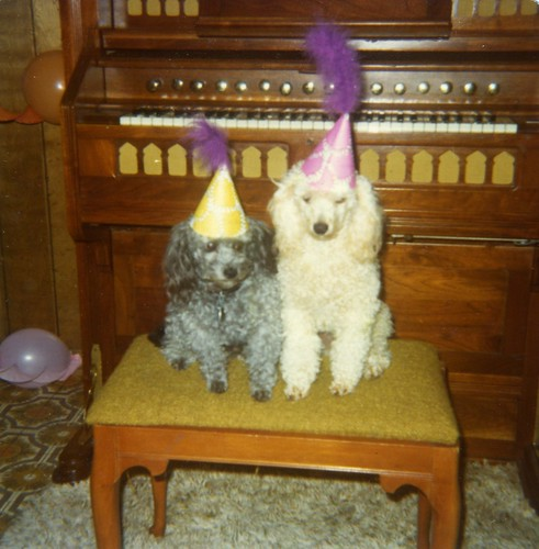 Smokey and Carmel at Carmel's first birthday party - August 15, 1975