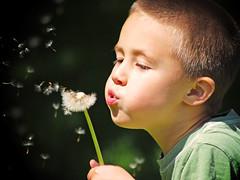 Helping nature along (James Jordan) Tags: boy portrait portraits child blow dandelion seeds mywinners abigfave familygetty2010