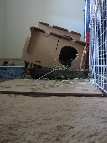 demolished bunny condo