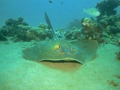 (Giorgia_Sharm) Tags: sony redsea egypt sharmelsheikh diving naamabay w300 sonyw300