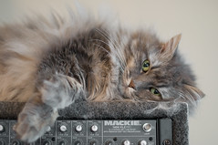 dj angel (Apogee Photography) Tags: pet cats pets animals cat 50mm nikon feline dof f14 kitty gatos gato nikon50mmf14 d5000 diamondclassphotographer flickrdiamond nikonafsnikkor50mmf14g nikond5000