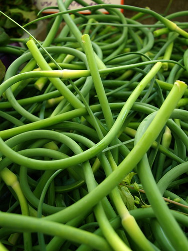 close-up of garlic scapes