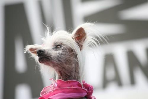 Princess Ugly Dog