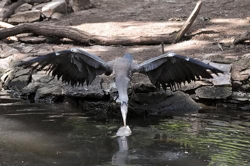 Berliner Zoo 2009