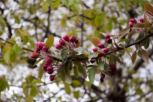 290410_ Blossom #1