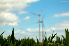 Welcome to Windmillland (Stephan Klassen / Styopan) Tags: blue sky field germany windmills welcome 2010 photographyart windmhlen windmillland windmuehlen skphotography styopan stephanklassen stephanklassenphotography windmhlenland windmuehlenland