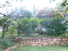 "africa 2013 547 <a style=""margin-left:10px; font-size:0.8em;"" href=""http://www.flickr.com/photos/104703188@N06/13061885024/"" target=""_blank"">@flickr</a>"