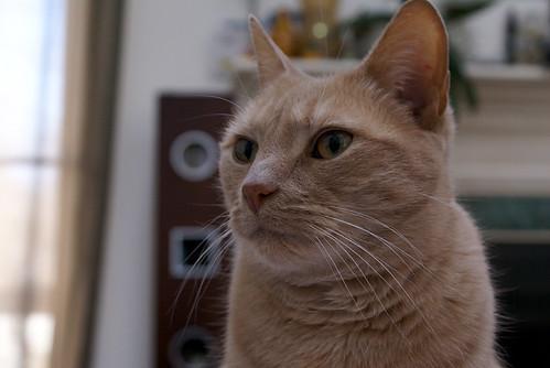 Jeter Portrait
