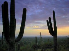 My Mood (imageining) Tags: blue light sunset arizona cactus cloud sunlight mountain green rain silhouette cacti landscape view purple desert tucson dusk edited bored dramatic az saturation saguaro sonoran picassa oversaturate