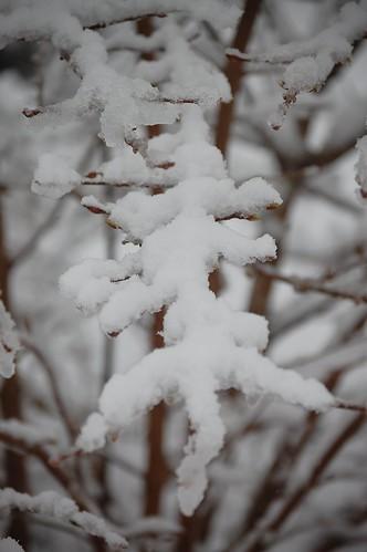 Snow 09 056