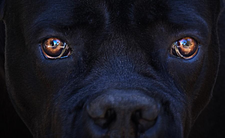 Le regard suppliant du chien noir