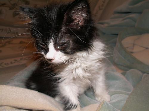 cat lucy