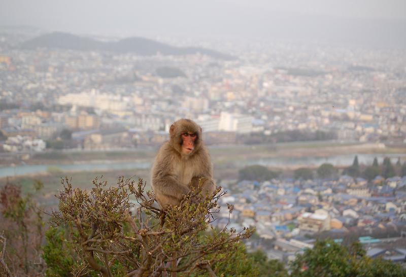 _monkey-22_