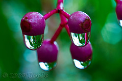 Morning Dew (T   J ) Tags: macro indonesia dew nikkor soe d300 mywinners abigfave teeje platinumphoto theunforgettablepictures rubyphotographer