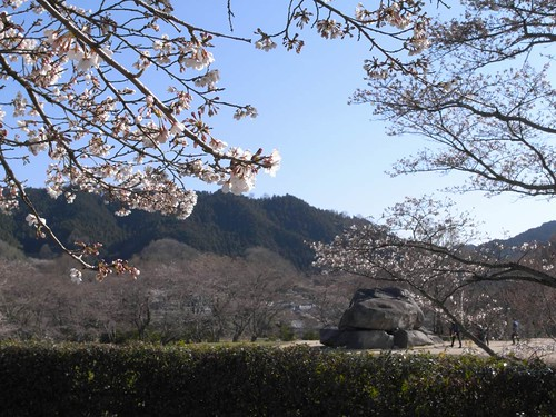 2009年-桜@明日香村