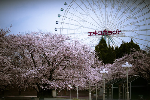 13554 : Sakura2009 #26 -Nobody in the Park-