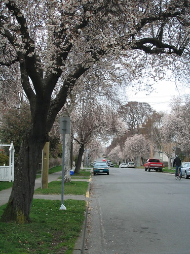 Victoria Spring