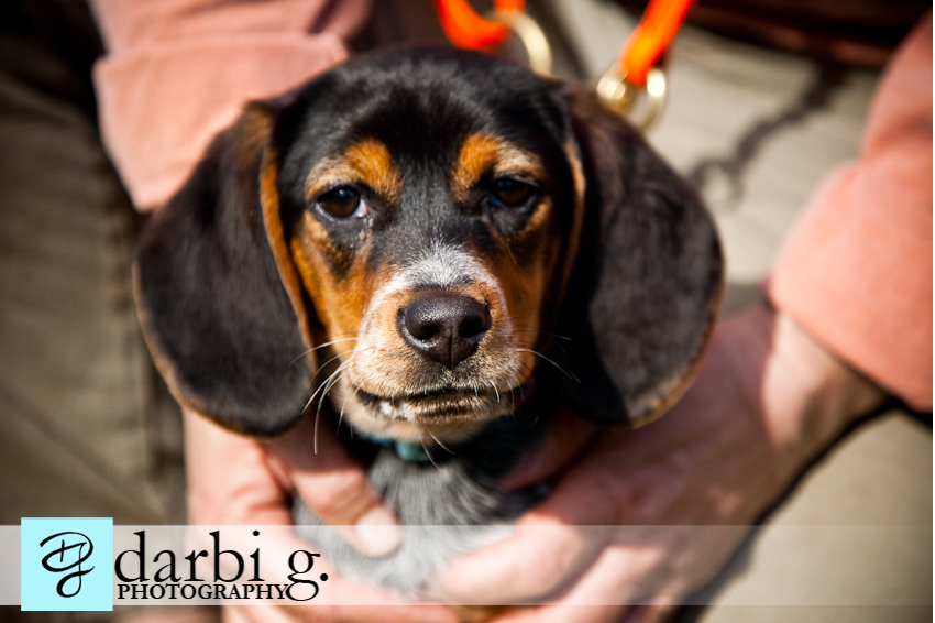 Darbi G photography-dog puppy photographer-_MG_1143