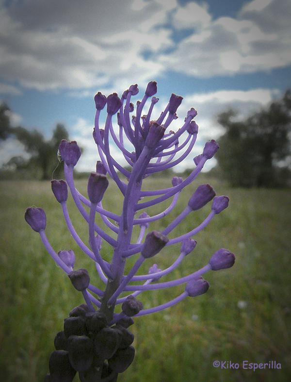 Candelabro en lila