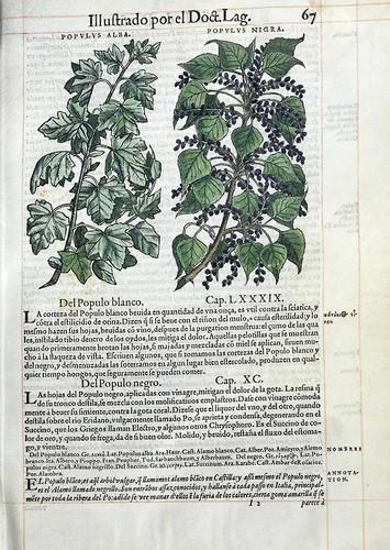 005- El  Alamo blanco y negro-Pedacio Dioscorides Anazarbeo 1555