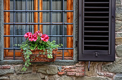 free flowers (paolo brunetti) Tags: red house flower reflection muro texture home window glass wall fence casa free finestra persiana fiori fiore rossi vetro grata goldengarden paololivorno paololivornosfriends