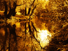 River of gold (Steve-h) Tags: trees ireland dublin brown water reflections gold finepix fujifilm dodder steveh explorefrontpage riverdodder s100fs doublyniceshot tripleniceshot aboveandbeyondlevel4 aboveandbeyondlevel1 aboveandbeyondlevel2 aboveandbeyondlevel3