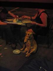 My Favorite Little Guy (nicholasian) Tags: nyc dog chillin sadface kangaroodog