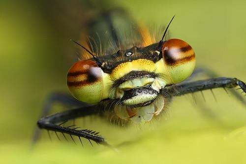 insecte en macro