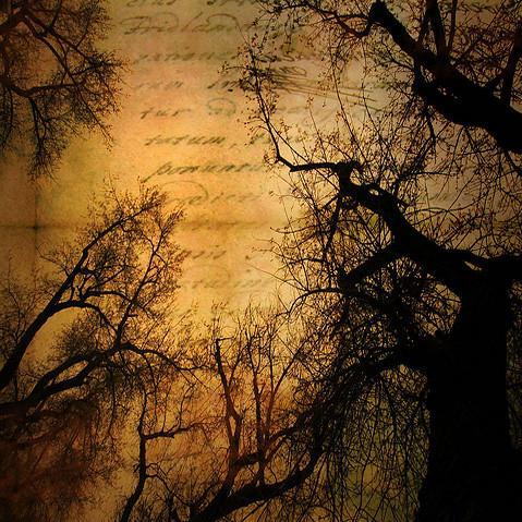 cottonwood awakening